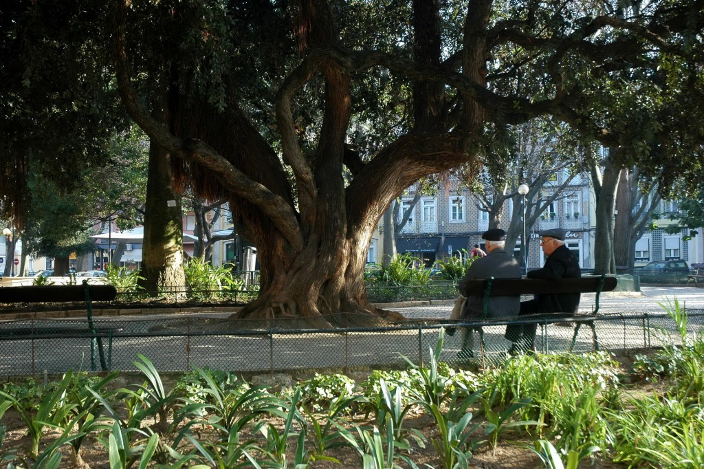 Jardim Teófilo de Braga